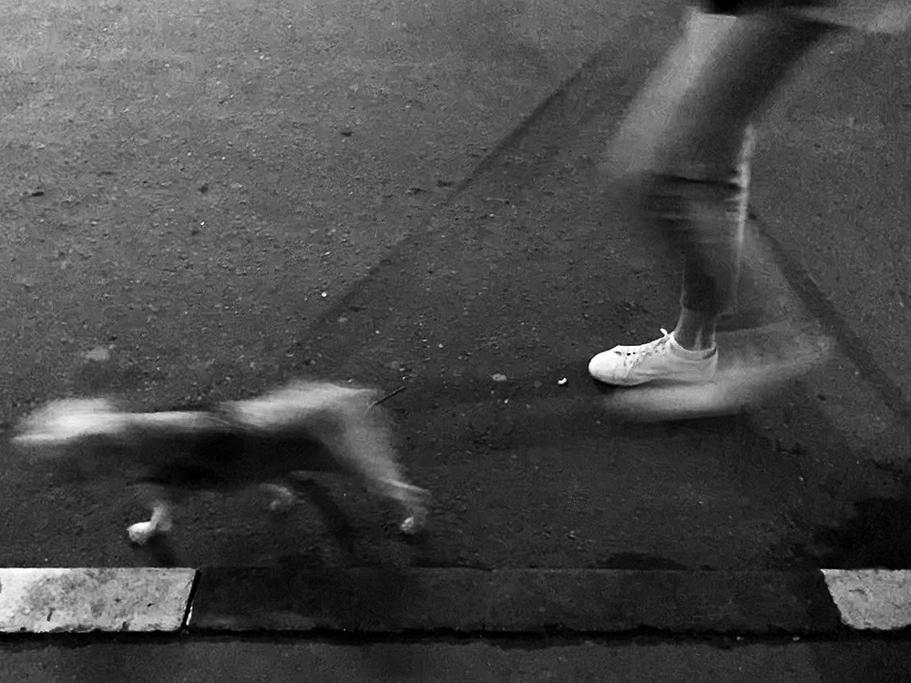 113/13.1 legs