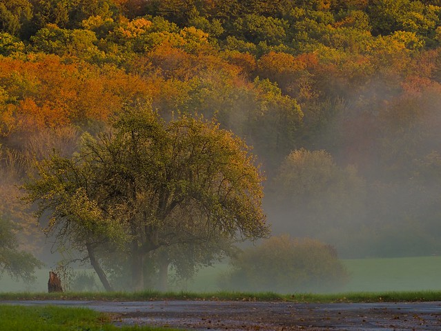 Autumn Trees&Fog