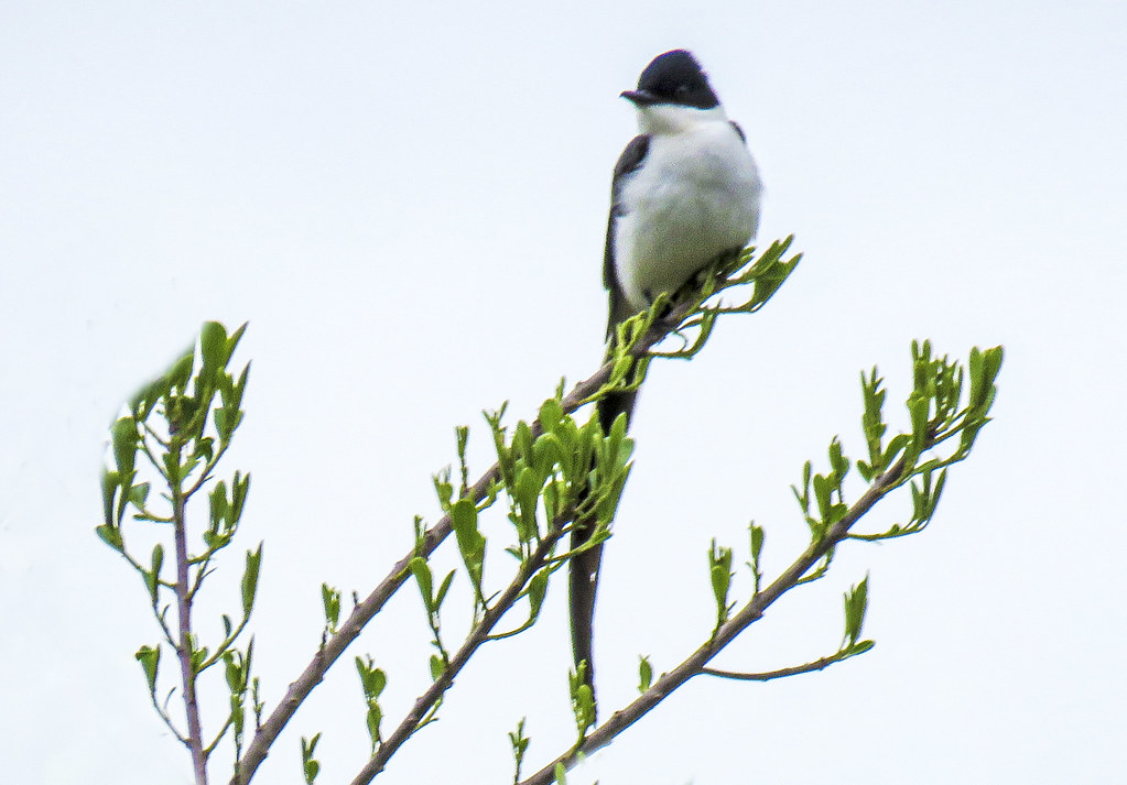 Afternoon Bird