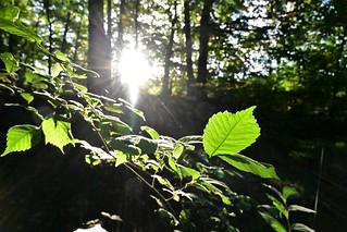 Wald am Mühlenteich