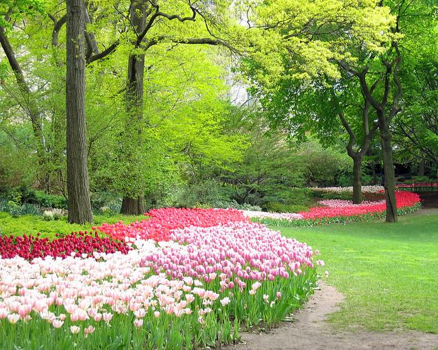 Central Park, NYC Springtime