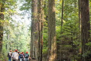 Forestry 250 | by Humboldt State University