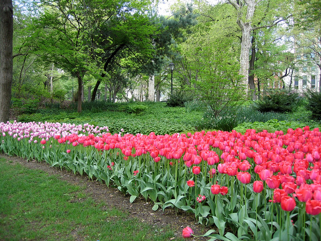 Central Park, NYC Spring