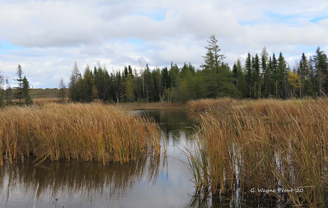 Marsh and Pond Area