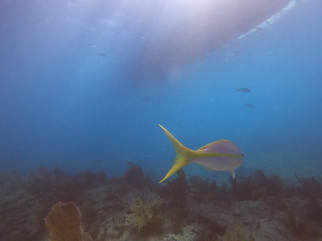 AM 27 NOV 2020 Dive Key Largo Images