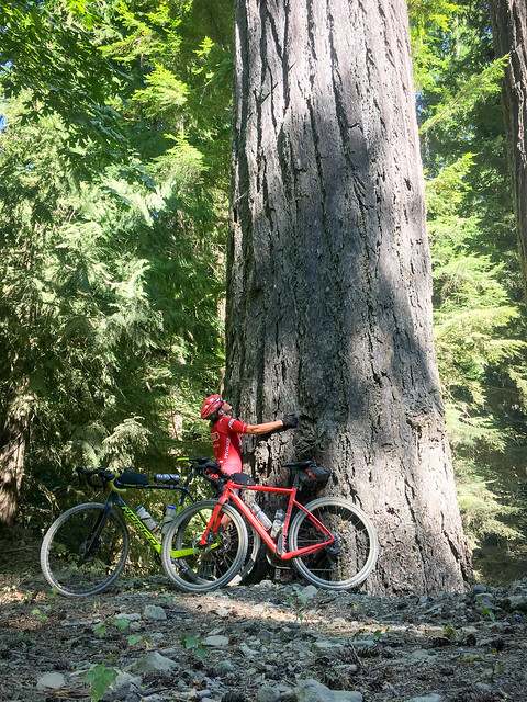 Day 1 - Tree hugger Love for the Old Growth