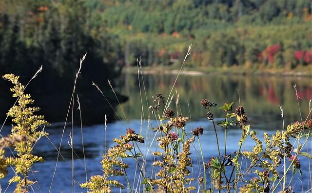 Début d'automne et couleurs! Bokeh! Mauricie, Québec.