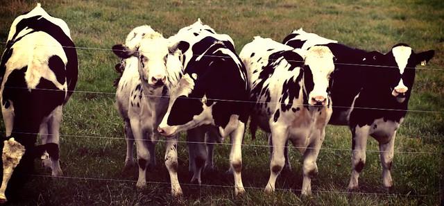 Photo Series: Life on the farm...: