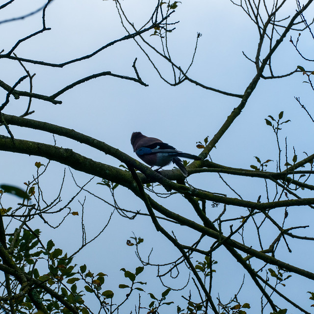 Jay, just landed nearby