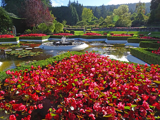 Begonias and pool at Butchart Gardens | by thegreatscaper