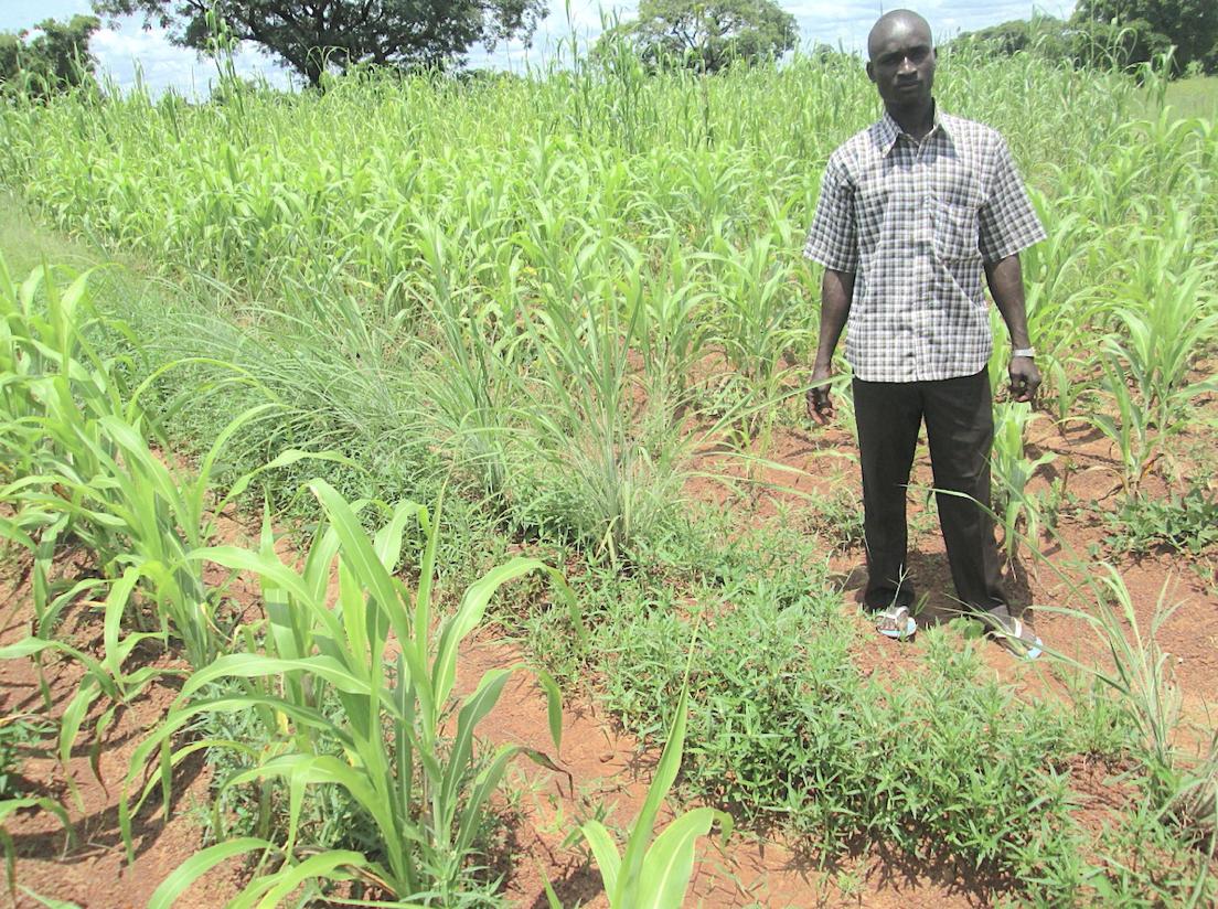 A study in Mali found that contour bunding helped to increase crop productivity. Photo credit: Birhanu Zemadim Birhanu/ICRISAT