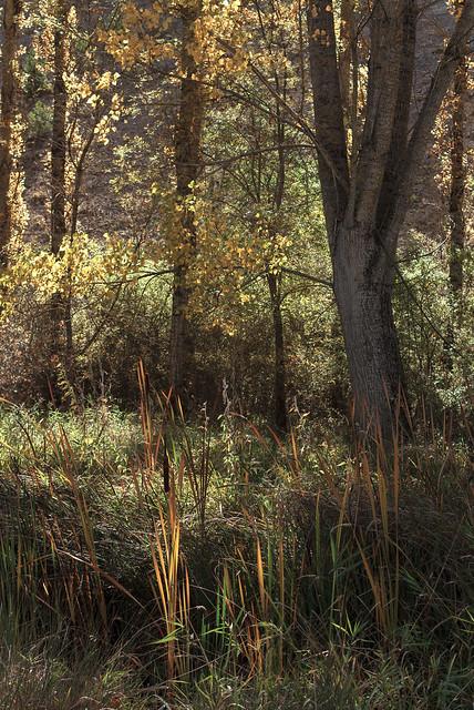 Naturaleza Klimtiana