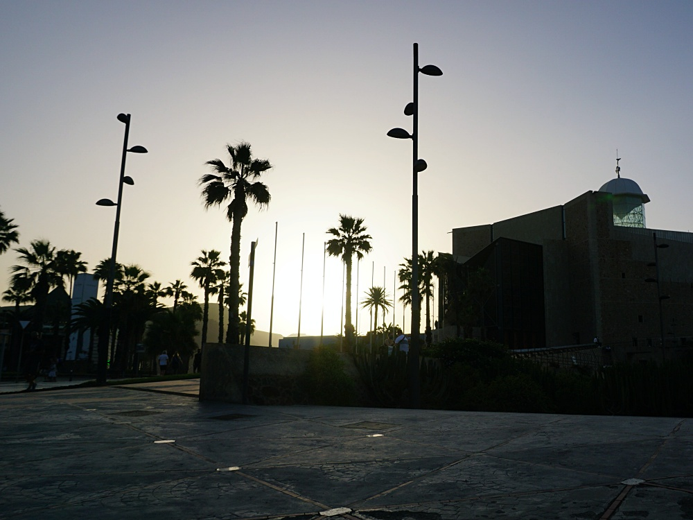 Las Palmas palm trees