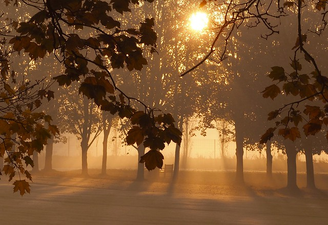 Golden November morning.