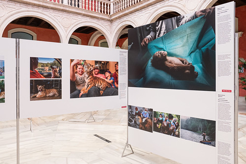 Exposición World Press Photo 2020 en la Fundación Cajasol (25) | by fundacioncajasol