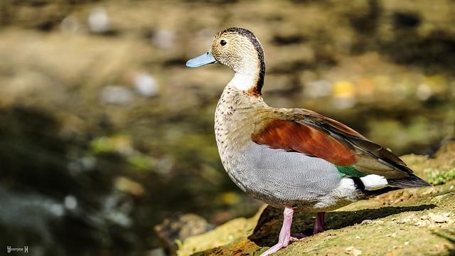 Bird - 8964