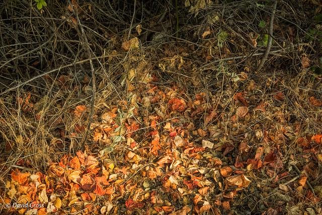 Autumn Ground Level