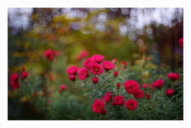 autumn in the garden #1