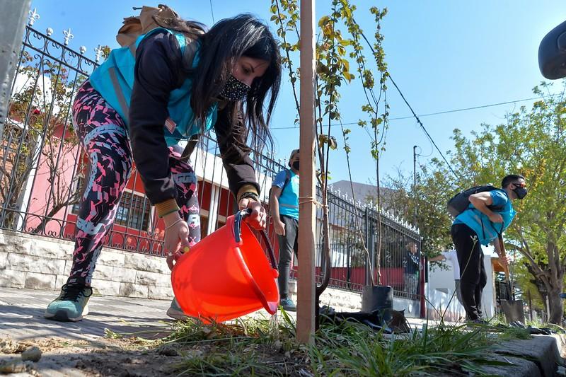 Colocan 200 nuevos árboles en barrio Los Naranjos (5)