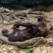 Cleveland Zoo 23