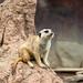 Cleveland Zoo 22