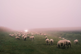 Morning flock. | by Nicolas Winspeare