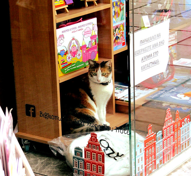 The bookstore cat is back...