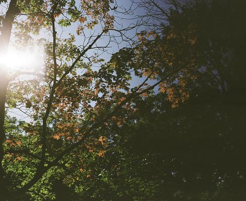 Moody leaves