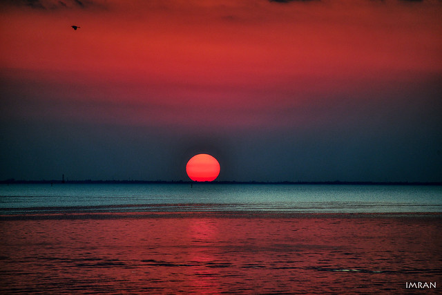 Like 3 Lovers, Warm-Blooded Solo Bird Soars Past Red Hot Blood Colored Solar Setting Past Slower Icy Blue Tampa Bay Florida Waters, All Come Together Tonight - IMRAN™