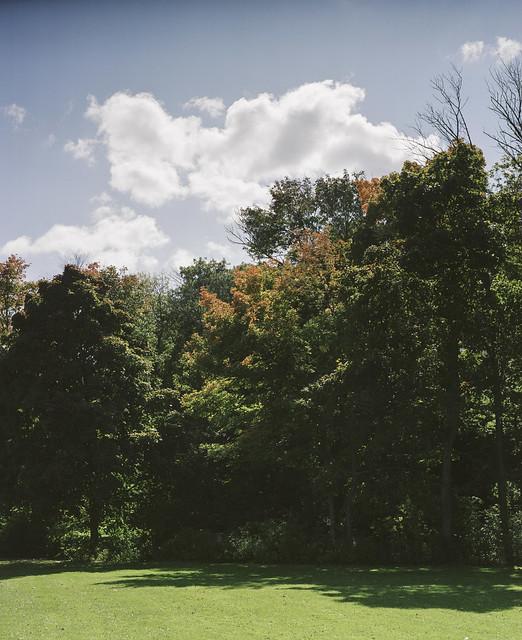 Lakefront trees