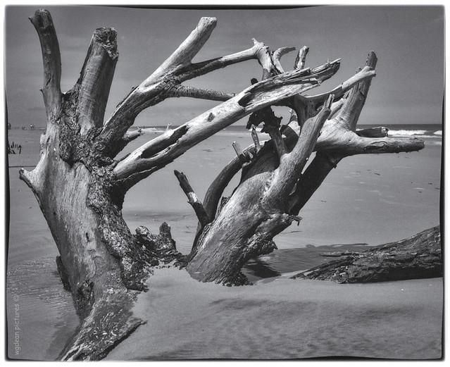 Hunting Island, SC      00019