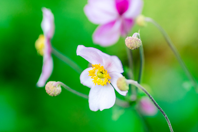 Pink & Petals