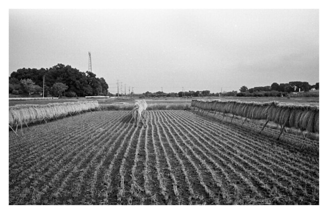 Crop and dry