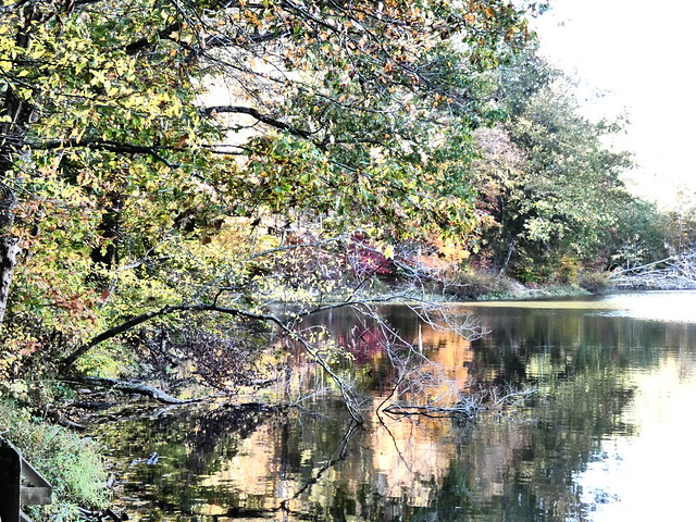 Brown County State Park Autumn 10132020