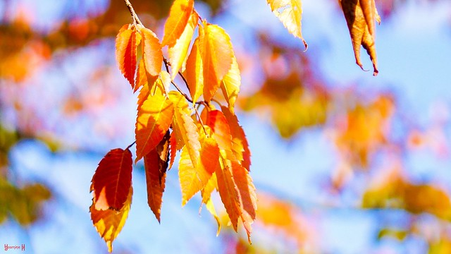 #Leaves - 8966