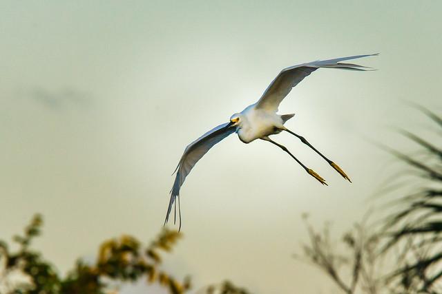 Wakodahatchee Bird in Flight