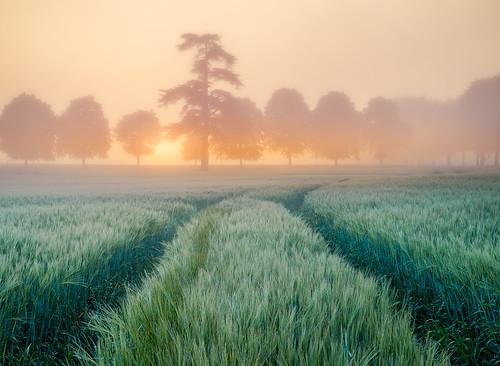 Misty sunrise and trees