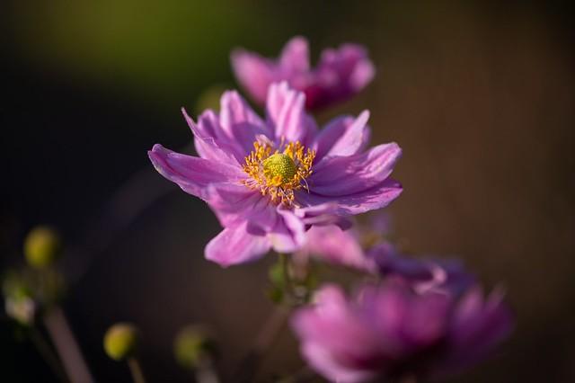 Shining autumn blossoms