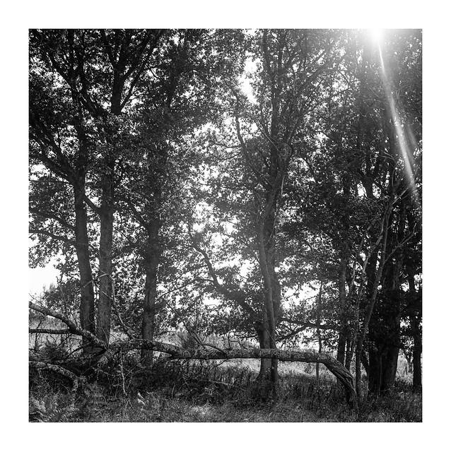 Trees in back light