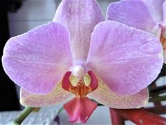 Subtilité florale