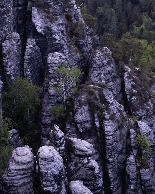 Birch on the rocks - Die Felsenbirke