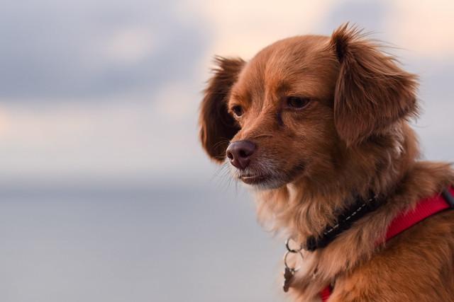 Laika en el Faro de Cabo Mayor