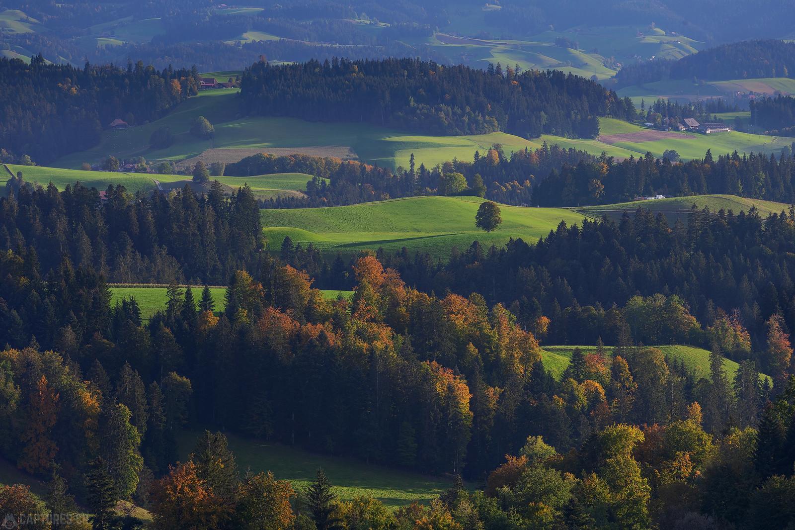 Fall trees - Lueg