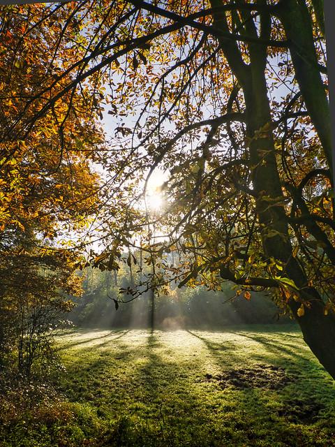 Herbstfarben - Autmn Colors (on Explore ⭐ October 15, 2020)