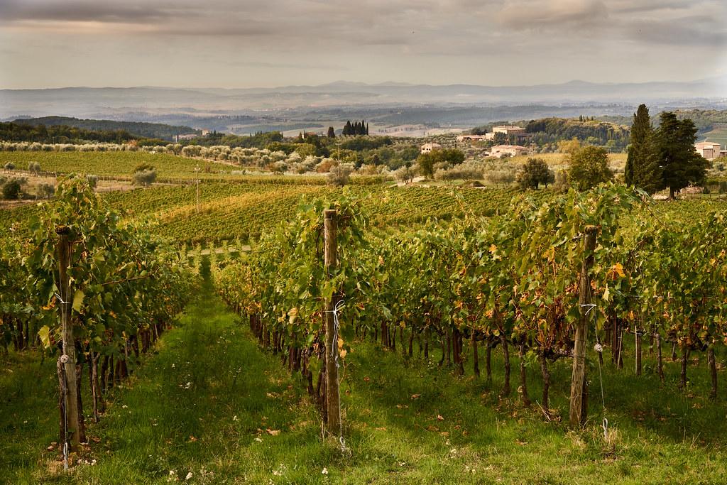 Viinipelto Toscanassa