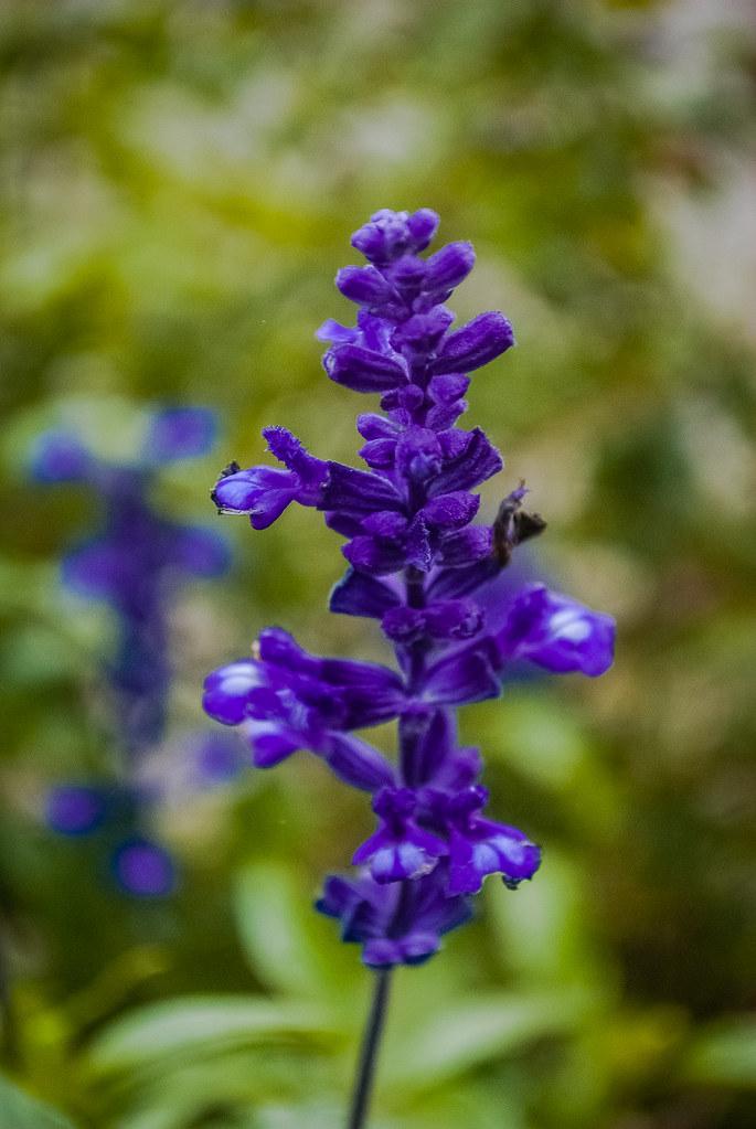 фиолетовые цветы 16:56:01 DSC_8409