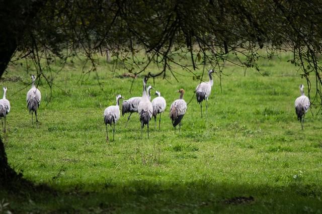 Oiseaux de passage (Ariège)