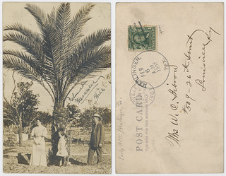 Palm at Mercedes | by SMU Libraries Digital Collections