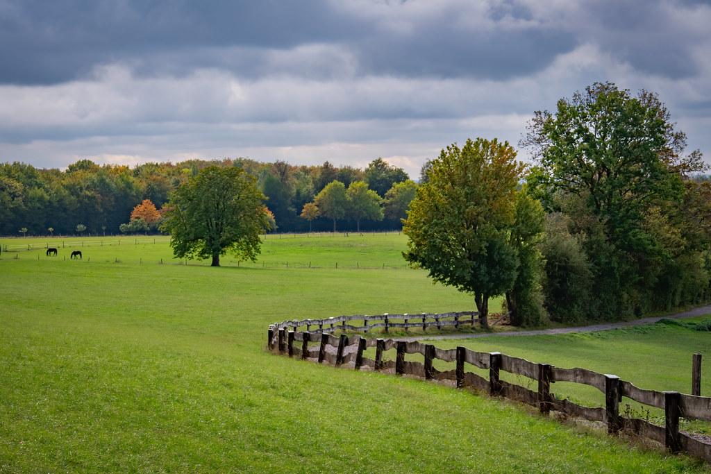 Dans les prés du début de l'automne... 50489997816_4d3e986dcf_b