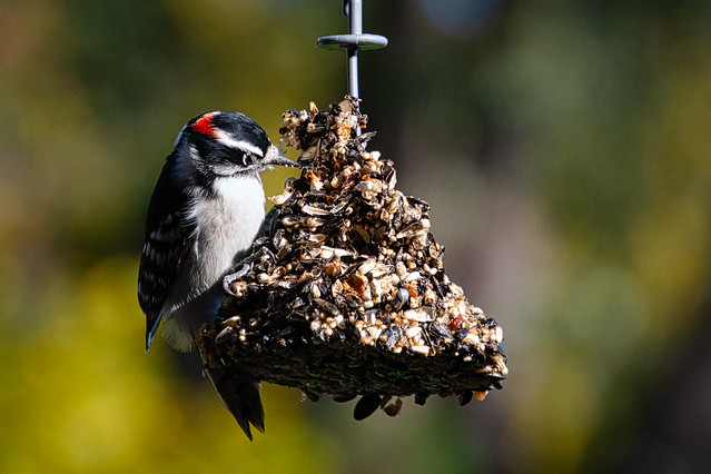 Woodpecker PPE